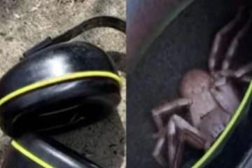 PERIGO: homem acha aranha escondida em fone de ouvido após sentir cócegas – VEJA VÍDEO