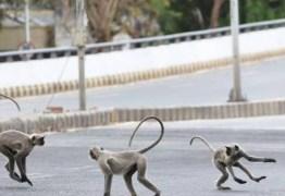 Briga entre grupos de macacos mata dois homens na Índia