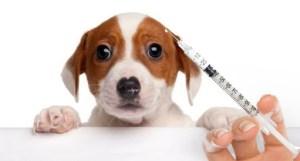 vacina animal 300x161 - Campanha de vacinação antirrábica segue ate o dia 23; Paraíba já imunizou 342 mil cães e gato