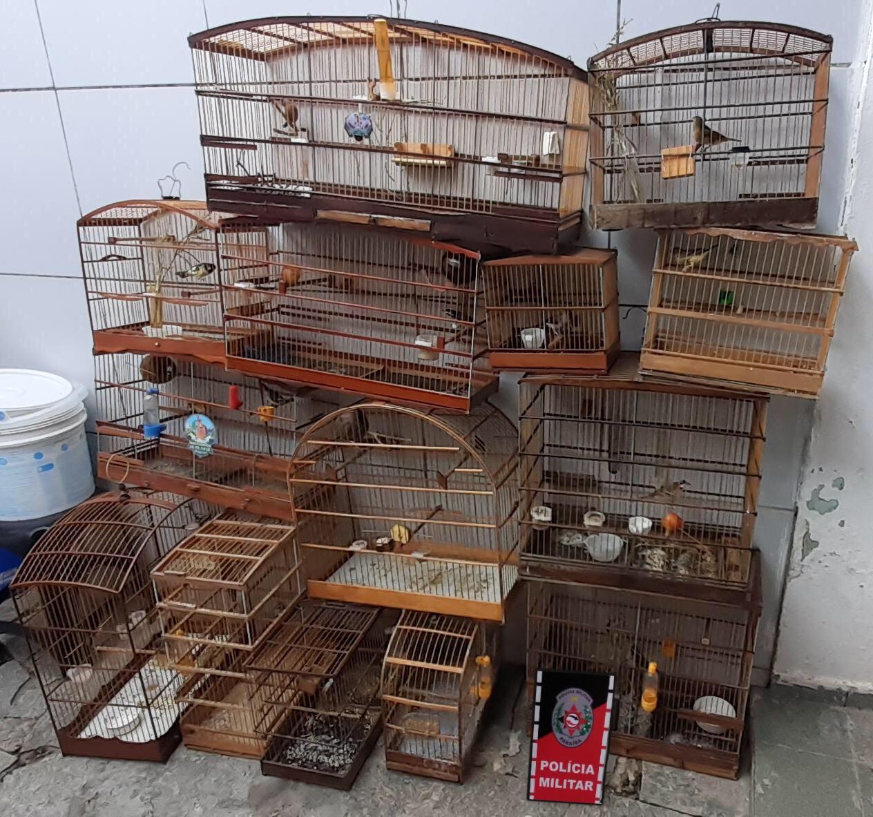 aves - Denúncia anônima leva Polícia Ambiental s apreender 14 aves silvestres em João Pessoa