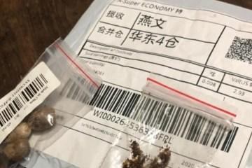 VINDAS DA CHINA: Sementes recebidas por brasileiros contêm pragas inexistentes no país