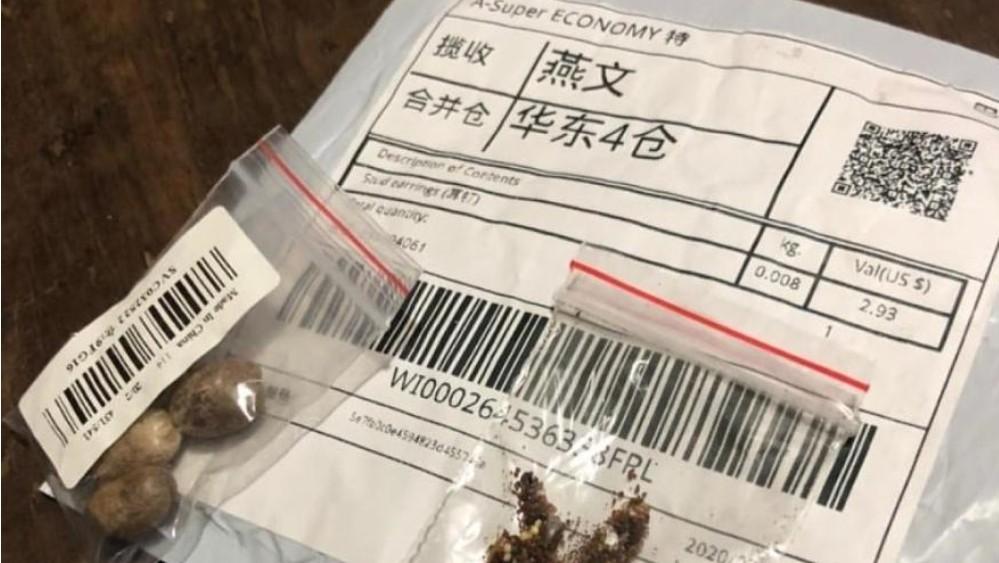 china 1 - VINDAS DA CHINA: Sementes recebidas por brasileiros contêm pragas inexistentes no país