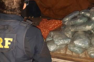 prf maconha na carga de cebola - PRF apreende 50kg de maconha escondida em fundo falso de caminhão carregado de cebola