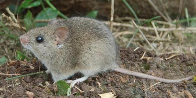 vírus chapare - Vírus letal encontrado na Bolívia pode ser transmitido entre humanos, diz CDC
