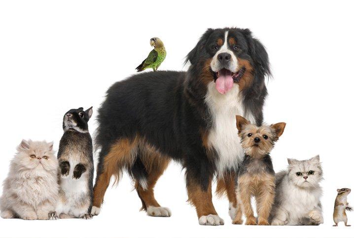 animais de estimacao pequenos - Campanha Dezembro Verde alerta sobre maus-tratos e abandono de animais