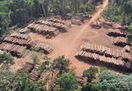 PF realiza maior apreensão do Brasil ao encontrar mais de 43 mil toras de madeira irregular, no Pará