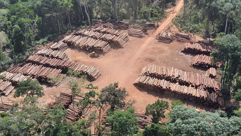 apreencao - PF realiza maior apreensão do Brasil ao encontrar mais de 43 mil toras de madeira irregular, no Pará