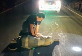 Após reanimação cardiorrespiratória bebê elefante tailandês sobrevive a atropelamento por moto