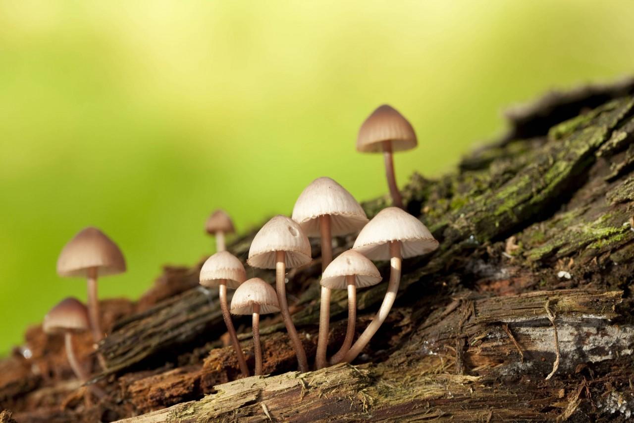 15572686185cd2088ad9e39 1557268618 3x2 rt - Homem injeta chá de cogumelo na veia, e é internado com fungo crescendo no sangue