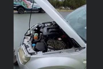 Mulher recebe bilhetes avisando que píton está escondida no carro e encontra surpresa