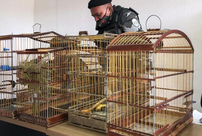 csm Aves policia ambiental 9d856020cc - Homem engole pássaro para se livrar de flagrante de crime ambiental na Paraíba