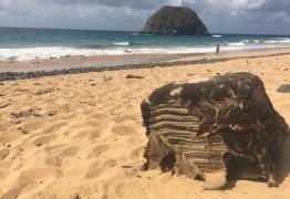 Caixa misteriosa volta a ser encontrada em praia do Nordeste após mais de um ano