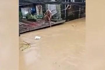 """Vídeo mostra idoso """"pescando"""" sacola de compras boiando em enchente"""