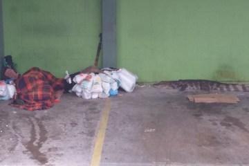 jacaré - PM imobiliza jacaré que estava a um metro de morador de rua - VEJA AÇÃO