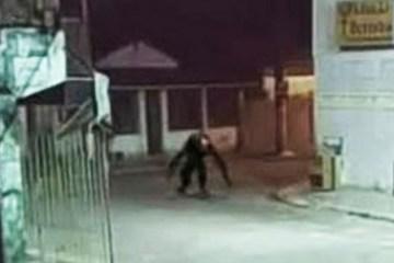 Boato de 'criatura estranha' assusta moradores de ilha brasileira