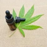 cannabis - Desembargador do TRF5 suspende autorização da Abrace para cultivar cannabis com fins medicinais na Paraíba