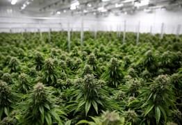 Nova York aprova decreto para legalizar posse, cultivo e venda da maconha