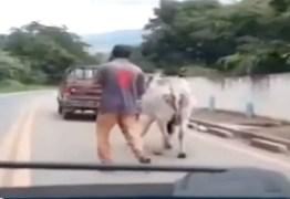 Motorista flagra homem arrastando boi com corda amarrada em caminhonete