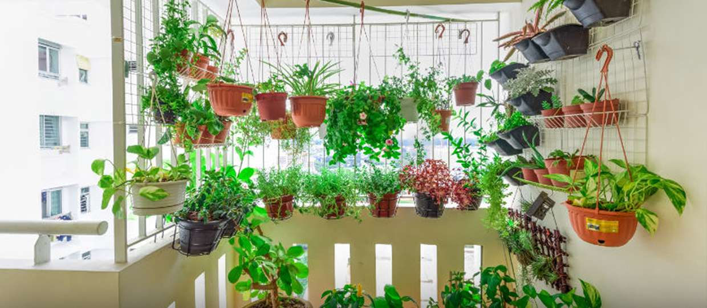 link2 6 1240x540 1 - TERAPIA E ALÍVIO: Pandemia e isolamento aumentam procura por cultivo de plantas em casa, conheça as melhores espécies para o seu lar