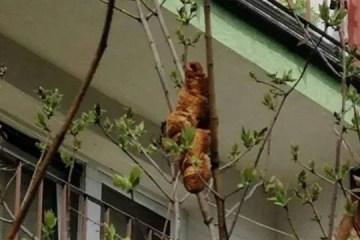 'Criatura bizarra' provoca pânico, especialistas vão ao local e esclarecem: 'É um croissant'