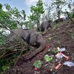 2021 05 14t081305z 555587322 rc2kfn9a8k8s rtrmadp 3 india elephants deaths - 18 elefantes foram encontrados mortos na Índia; raio pode ter sido a principal causa