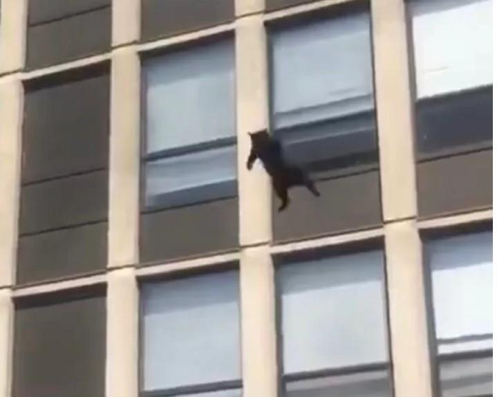 Capturar 60 - Sete vidas? Gato pula do quinto andar de prédio em chamas e sobrevive - VEJA VÍDEO