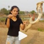 Capturar 97 - Jovem viraliza ao brincar com cobra que mata 20 pessoas em uma picada