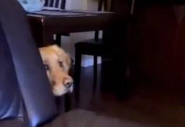 Cadela se assusta ao ver cena de Star Wars e viraliza
