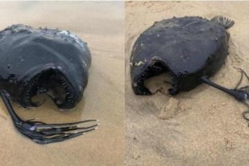 ASSUSTADOR! Criatura das profundezas do oceano surpreende ao ser encontrada intacta em praia – VEJA FOTOS