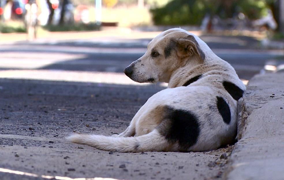 caes - CRUELDADE: Polícia Civil investiga envenenamento de cães e gatos em Cabaceiras para identificar responsável pelo crime