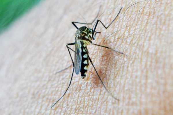 Malaria threat amid Covid pandemic