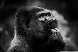 mono pensando