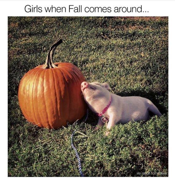 pumpkin-pig