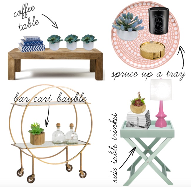 how to style succulents