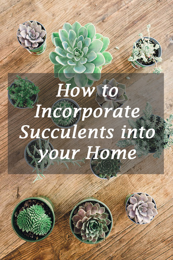 how to incorporate succulents into your home