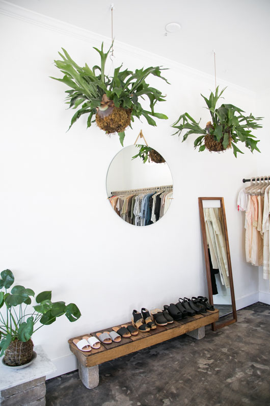 3 Pet-Safe Plants That are Pretty, Too    www.PolishedClosets.com