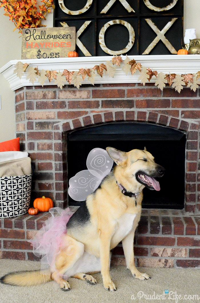 Inexpensive Dog Costumes for Halloween
