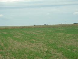 Poland field