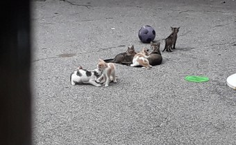 Stopping to Feed the Kittens