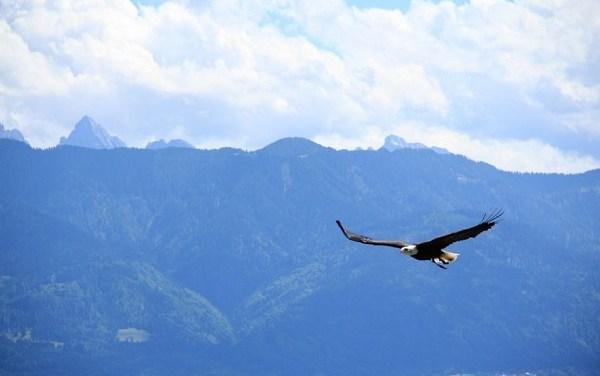 """Il Bel paese può volare alto con i suoi """"liberi e forti"""" – di Giovanni Palladino"""