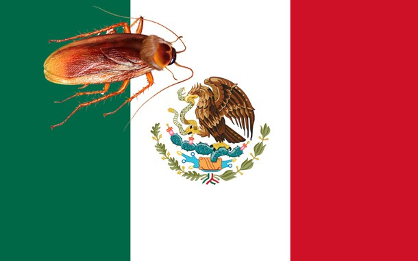 pest mexico New mexico pest control proudly services residential and commercial properties in albuquerque, santa fe and surrounding areas.