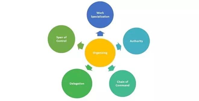 Principles of organization