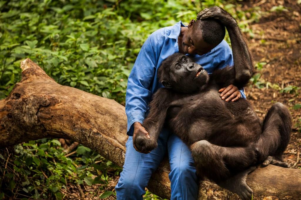 La Belgique s'inquiète de la fermeture du parc national des Virunga en RDC