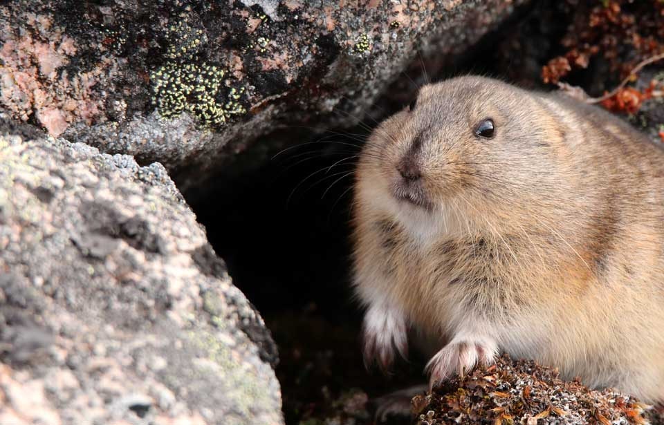 Republicans are happy lemmings