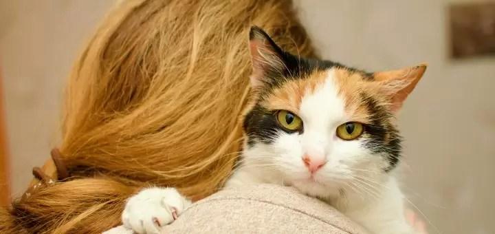 rasa kota dla dojrzalej kobiety