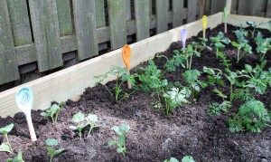 vegetable garden markers | polka dots and picket fences