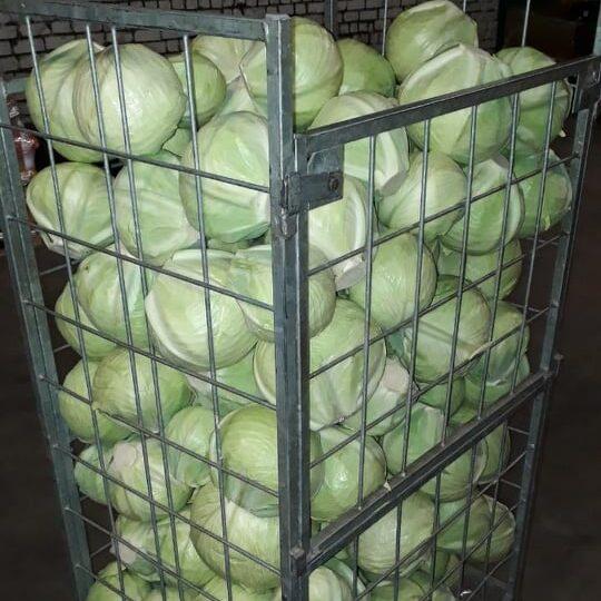 Kapsas talutoodang koju kätte kartul kojutoomisega