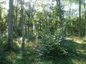 Fineshade Wood kolo Corby