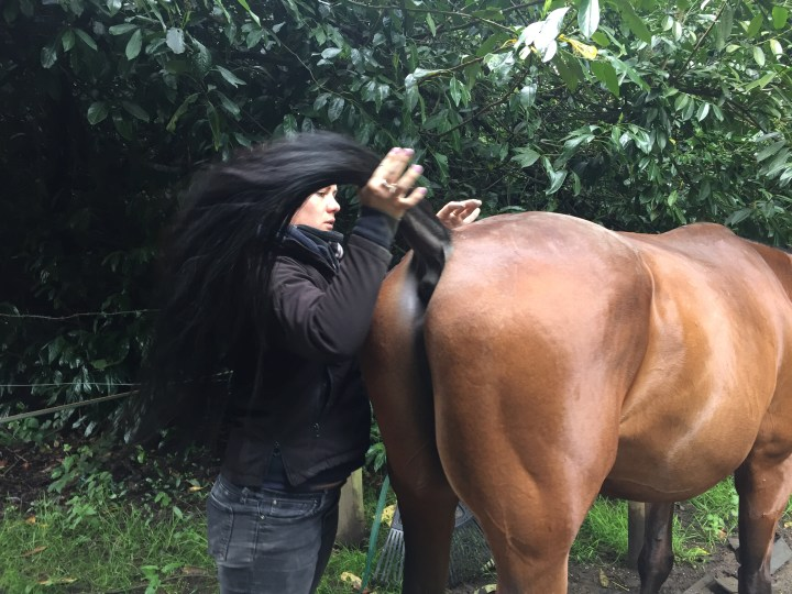 PoloPeoplePlaces.com about Equine Sport Massage