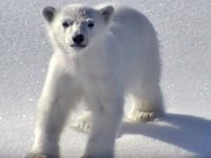 big-bear